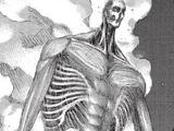 Titan Colossal