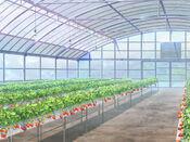 Bg strawberryfarm