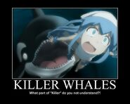 Killer whale: natch predator of the squid