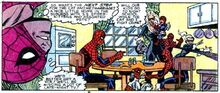 Spider-cat family