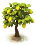 Sw lemon last