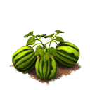 File:Sw watermelon last.png