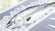 Tokishirazu Salmon (Anime)
