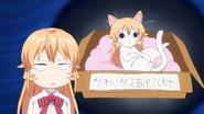Stray Cat Erina