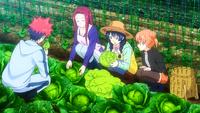 Soma, Megumi, Ryoko and Yuki picking up vegetables