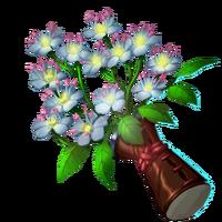 Remedies Elderflower