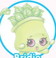 Bridie Basil