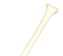 Solid Bone