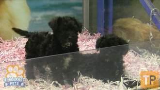 Benson at pet shop