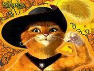 Gato poster