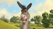 Poster de burro
