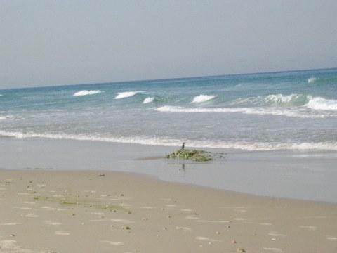קובץ:שלדג בחוף.JPG