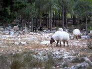 פסלי כבשים בחניון יד קנדי