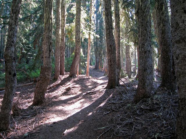 קובץ:Forest Trail.jpg