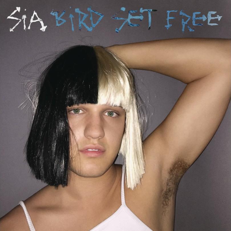 Bird Set Free Sia Wiki Fandom