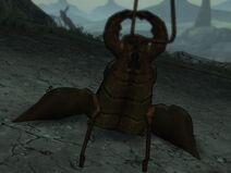 Giant scythid