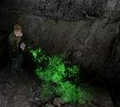 Green Spray