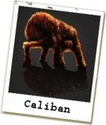 Caliban photo