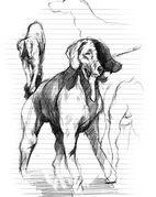 Doubleheaddog
