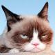 Grumpycatpk