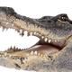 NileCrocodileFvF