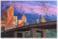 Bat-bridge