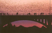 Congressavebridge bats