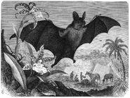 Grosse Vampirfledermaus-drawing