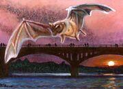 Congress-Avenue-Bridge-Bats