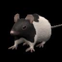Ratsa