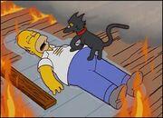 Le Chien-chien à son Homer
