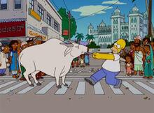Homer boi índia