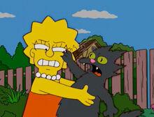 Lisa gato arranha