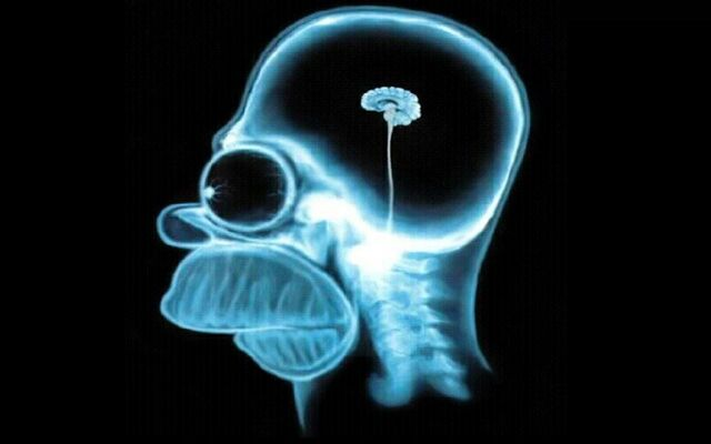 Файл:Homer-simpson-brain,1280x800,18857.jpg