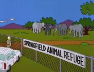 Bart Gets an Elephant 105