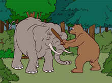 Urso ataque elefante 2