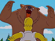 Urso homer ataque 2