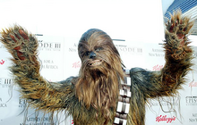 Chewbacca real