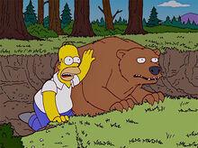 Homer urso amigos 3B
