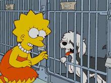 Lisa cachorro gracinha abrigo