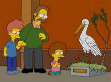 Flanders bravo todd cegonha