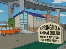 Abrigo de animais springfield