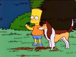 N chien de ma chienne