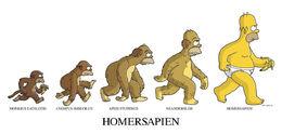 Homersapien 17x21B