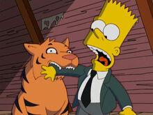 Tigre buttercup morde bart
