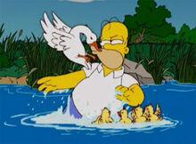 Homer pata patinhos briga