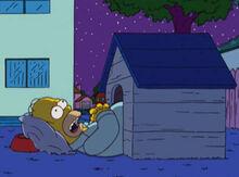 Homer dormindo casa cachorro