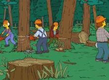Moradores barnacle bay cortam árvores