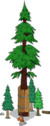 World's Largest Redwood Level 6