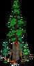 World's Largest Redwood Level 5
